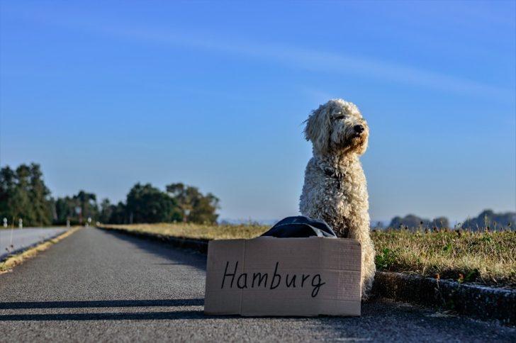 hitchhike03