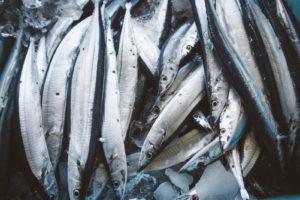 flesh-fish