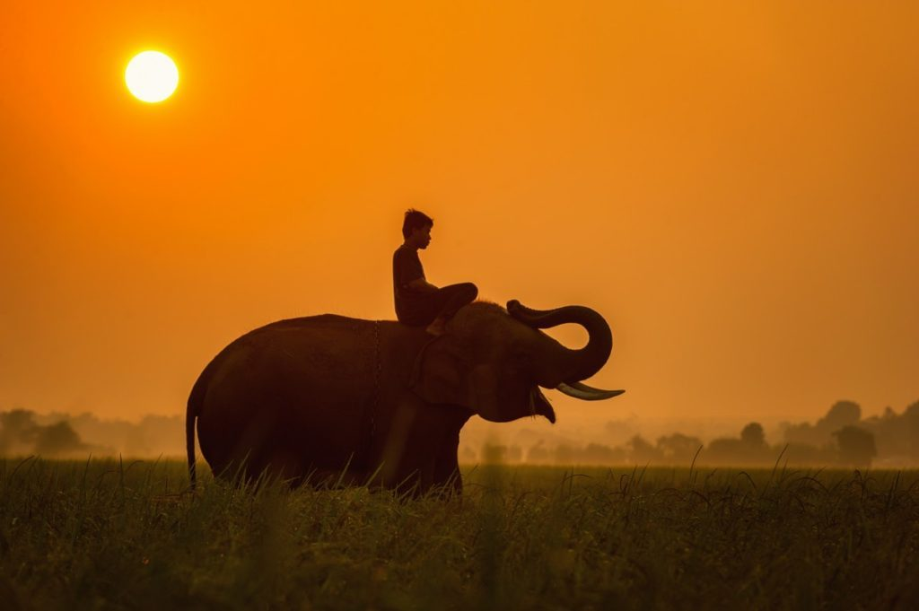 africa_africans_animals_asia_pretty_cambodia_cornfield_elephant