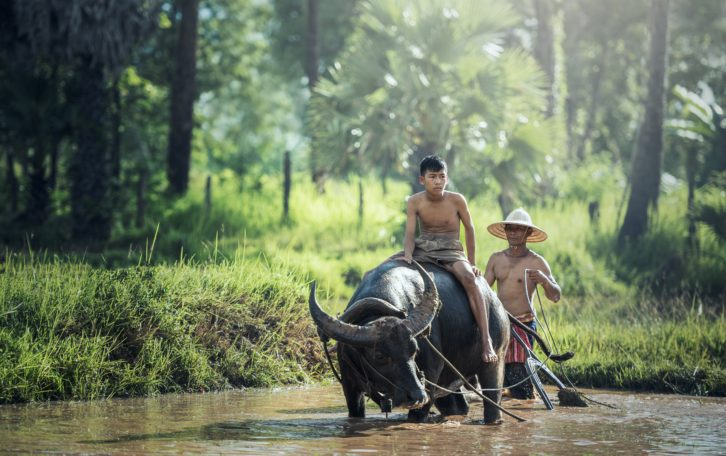 water-nature-forest-wilderness-people